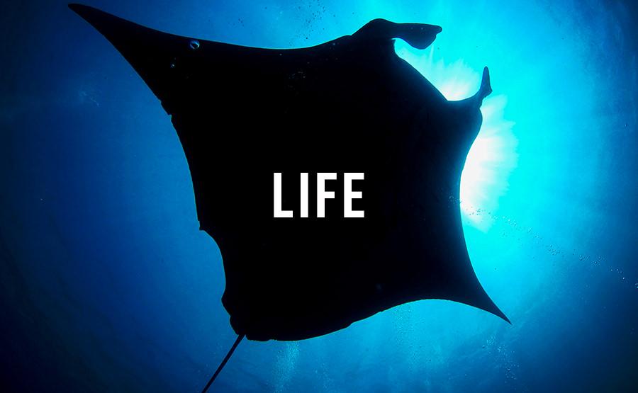 人生にスパイスを。
